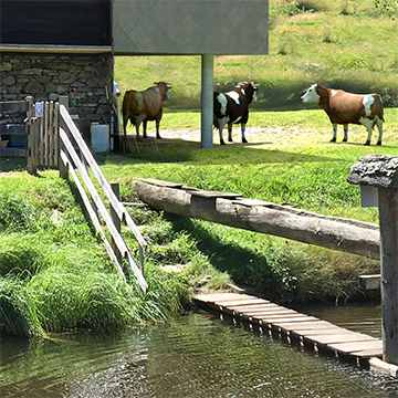 Jausenstation mit 3D-Vieh